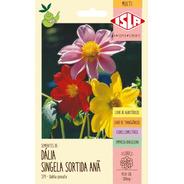 Sementes De Dália Singela Sortida Anã Flor