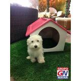 Casas Para Perro En Fibra De Vidrio