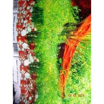 Painel Decorativo Foto Tronco Fundo Preto P Aquários 100x50
