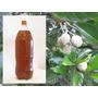 Jenipapo Suco Natural Puro Da Fruta Extrato Concentrado 2l