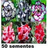 50 Sementes De Rosa Do Deserto( Adenium Obesum)mix De Cores