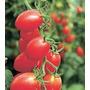 30 Sementes De Tomate Sweet Grape - Para Mudas Frete Gratis