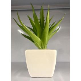 Plantas Suculentas Artificiais Vaso Branco Cerâmica