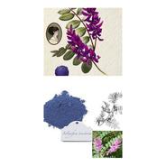 Índigo Azul Verdadeiro Indigofera Tinctoria Sementes P/mudas