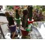 Cactus Injertados...el Regalo Mas Original Para Papa Noel