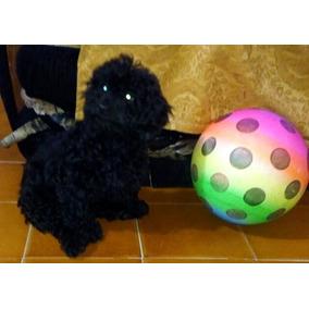 Linda Cachorrita French Poodle Negro Azabache Minitoy