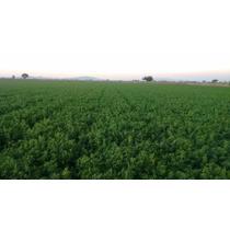 Alfalfa Paca Alta Calidad Desde $3.50 Precio X Kg Mayoreo