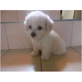 Cachorrito Tacita De Te Hembra