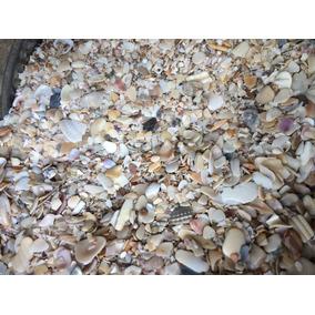 Conchilla De Mar Por Kilo. Peceras, Terrarios, Adornos
