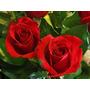 Semillas Rosa Roja Flor Rosas Rojas Divinas!