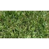 Grass Americano, Abono Organico Y Plantas Ornamentales