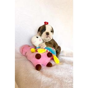 Hembritas Bulldog Ingles +pedigree+ 1 Mes De Vete En Devoto