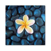 Plumeria & Pebbles 2 Canvas Art By David Evans