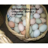 Pollas Criollas Ponedoras De Huevo Azul Y Verde