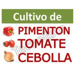 Kit Aprende Cultivo Pimentón, Cebolla Y Tomate.