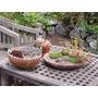 Suculentas Cactus Piedras Decorativas Para Macetas 600g(avl)