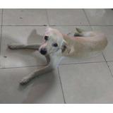 Cachorro Tamaño Chico 6/7 Meses En Adopción