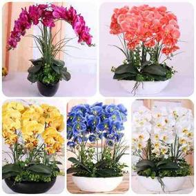 200 Sementes Flor Orquídea Exóticas Raras/p Mudas