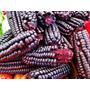 Raro.kit 10 Sementes Do Real Milho Roxo Para Cultivar Mudas