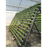 Tubo Pvc Hidroponia 3 Sistema Nft Cultivos