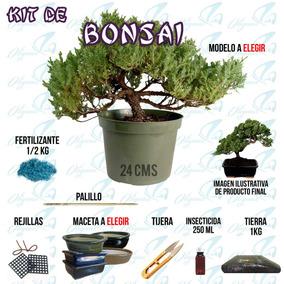 Kit Bonsai Mediano, Árbol + Maceta + Abono + Palillo