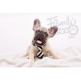 Cachorros - Bulldog Francés - Paga Con Visa - Mascotas