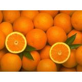 Arbol De Naranjas Dulces