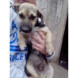 Cachorro Enano En Adopcion, Lee Su Historia!!