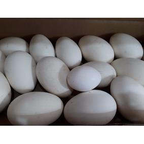 Cascarones De Ganso. Huevo De Ganso Vacíos Para Decorar.