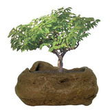 Dunecraft Rock Gardens Bonsai Rock Garden