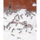 Tierra De Diatomeas Insecticida Chinches Cucarachas Hormigas