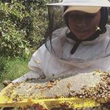 Miel De Abeja 100% Pura (1kg) (flor De Aguacate)