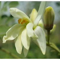Miel Uniflora De Moringaoleifera Envio Gratis..!!