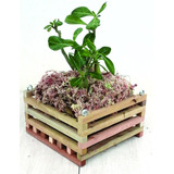 Cachepot De Madeira Rústica, Porta Vaso De Orquídea 20x20 Cm