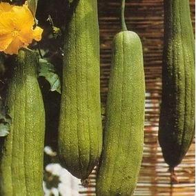 Bucha Vegetal 8 Sementes Promoção