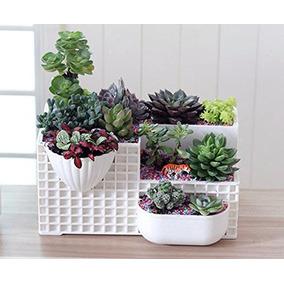 Plantas de ornato y maceta para oficinas en mercado libre for Plantas para oficina