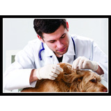 Quadro Decorativo Veterinário Pet Shop Consultórios