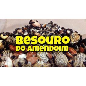 Besouro Do Amendoim (500 Unidades) Frete Grátis