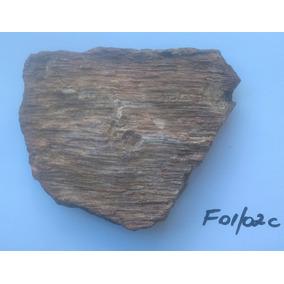 Fóssil De Árvore Madeira Petrificada
