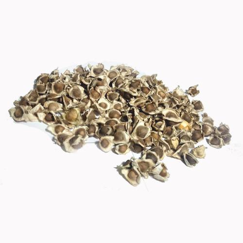 10 Semente Moringa Oleifera Milagre Emagrecedor + Manual