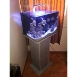 Acuario Marino Completo,pecera,peces,pez,skimmer,agua Salada