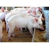 Raciones/comida Cerdo Terminador (engorde) 40 Kg.