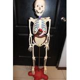 Esqueleto Y Organos Del Cuerpo Humano . Envío Gratis.