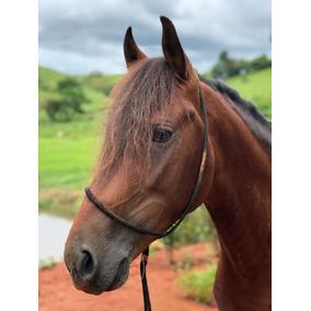 Cavalo Mangalarga Marchador Sem Registro Marcha Picada