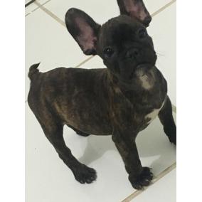 Filhote Bulldog Frances Macho Tigrado Disponivel/ Pedigree
