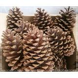 Pinha Natural - Natal Decoração Artesanato