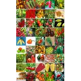 Kit 45 Variedades Sementes De Pimenta Especiais Raras Brinde