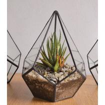 Terrario Gota Con Cactus O Suculenta
