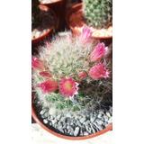 Cactus Grandes Con Flor!!