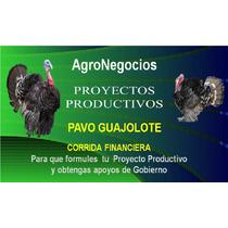 Inicia Negocio Pavos Proyecto Productivo Corrida Financier